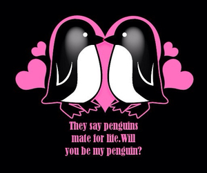 love, bf, and penguin love :) image