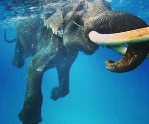 elephant, hipster, and watter image