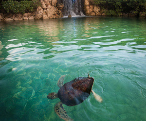 turtle, waterfall, and nature image