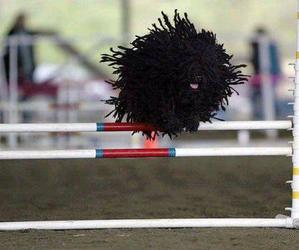 dog, black, and funny image