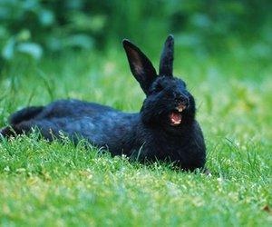 black, green, and rabbit image