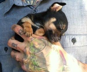dog, hand, and tattoo image