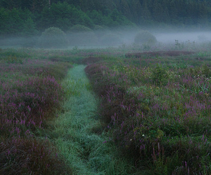 fog, meadow, and nature image