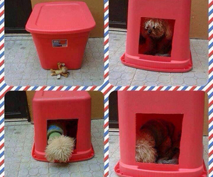 dogs, house, and reciclaje image
